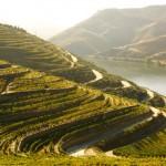 Douro eleito como melhor itinerário turístico fluvial da Europa