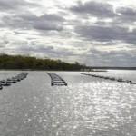 Investimento norueguês financia 12 ME em aquicultura na Figueira da Foz