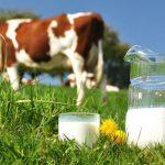 Produtores de leite e carne manifestam em marcha lenta para exigir melhores preços e quotas leiteiras
