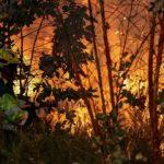 """WWF: Portugal é """"o campeão europeu"""" dos incêndios onde todos os anos arde mais de 3% da floresta"""